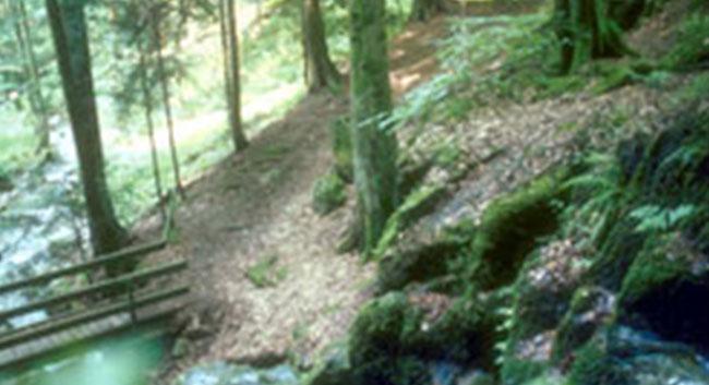 Pietät Mayer - Baumbestattungen